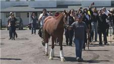 Triple Crown hopeful California Chrome arrives at Belmont Park