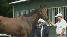 American Pharoah 'ready' for Belmont Stakes