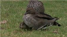 Scott and Wilson share the Australian Masters lead