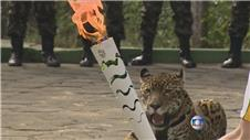 Jaguar shot dead after posing with Olympic torch