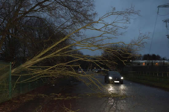 Manchester United's stars forced to swerve around trees brought down by Storm Eleanor on way into training