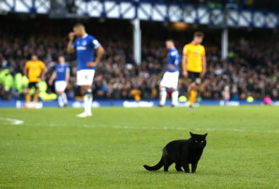 Everton's defeat to Wolves interrupted as BLACK CAT causes lengthy delay after roaming on pitch